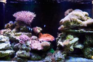 Custom aquarium builders - design and maintenance