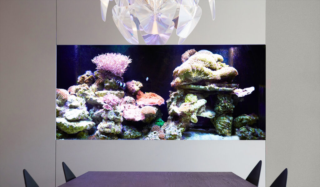 saltwater aquarium vs freshwater aquarium